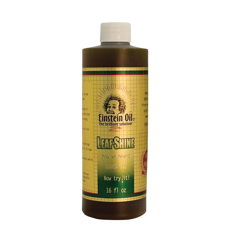 Einstein Oil (16 oz)