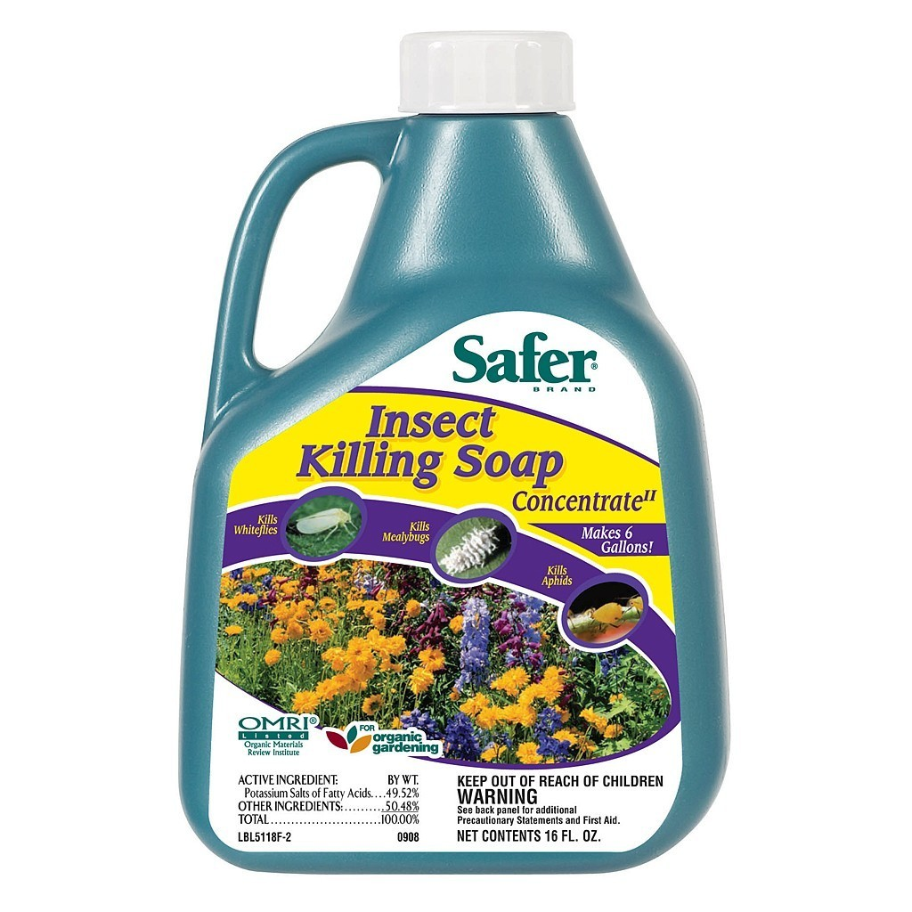 Safer Insect Killing Soap (16 oz. Concentrate)