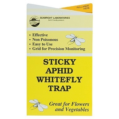Sticky Aphid Whitefly Traps 5pk